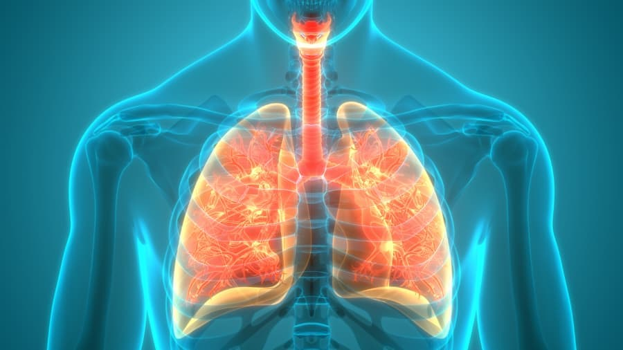 illustration of human lungs and respiratory system